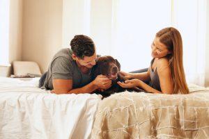 Pet custody in florida